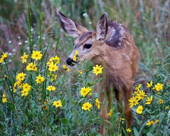 这就是春天吗?25张照片带你看专属小动物们的春日体验