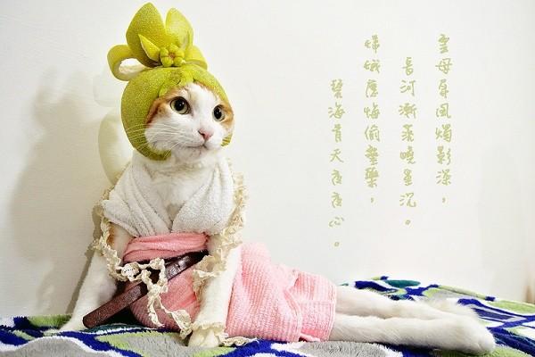 娇媚「嫦娥猫」美丽又可爱的外表下,其实有段悲伤的过去.