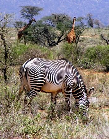 肯亚动物方程市!加入非洲大联盟