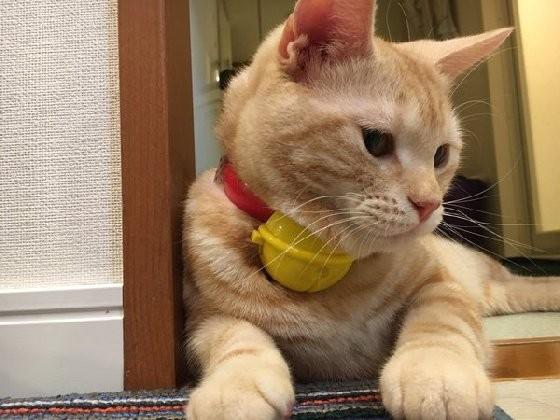 壁纸 动物 猫 猫咪 小猫 桌面 560_420