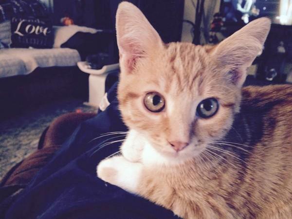 新生小橘被猫妈妈丢下 她不畏附近的龙卷风坚持开车救援