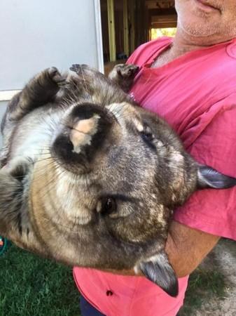 有养宠物的人大概都体验过毛孩子们萌度爆表的撒娇,不过,澳洲一间动物