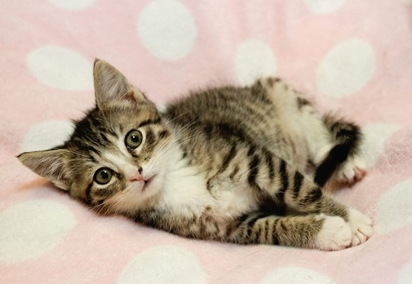 2只奶猫被丢垃圾桶「喵喵」哭泣 帅哥消防员救了它们
