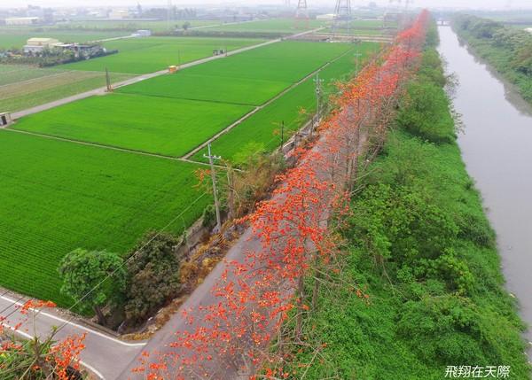 木棉花季来了!彰化最美3处秘境「红色大道」