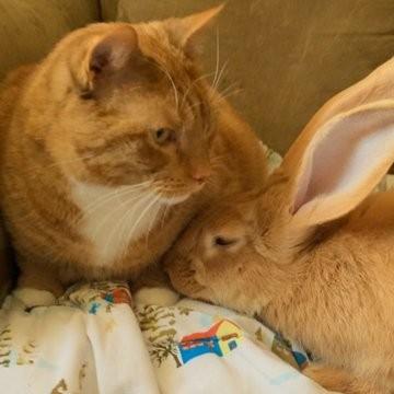 我们真的不是双胞胎啦!萌兔与肥猫称兄道弟的可爱日常