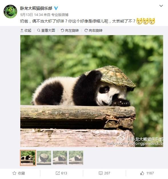的小熊猫超级可爱