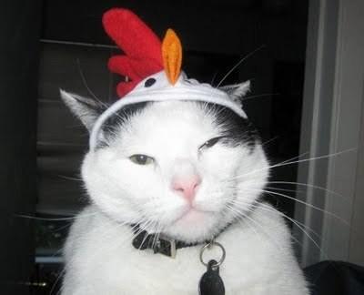 喵~不要帮我戴帽子!