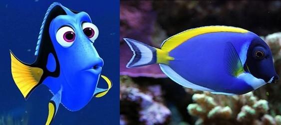 《海底总动员》尼莫太可爱下场,ㄜ.被人类捕光啦