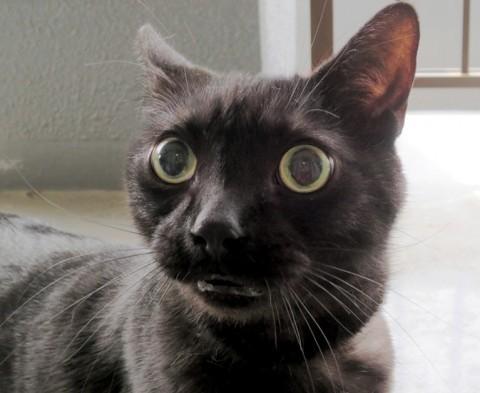「你说什麼!」 猫咪惊讶表情大集合图片