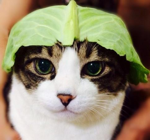 壁纸 动物 狗 狗狗 猫 猫咪 小猫 桌面 484_450