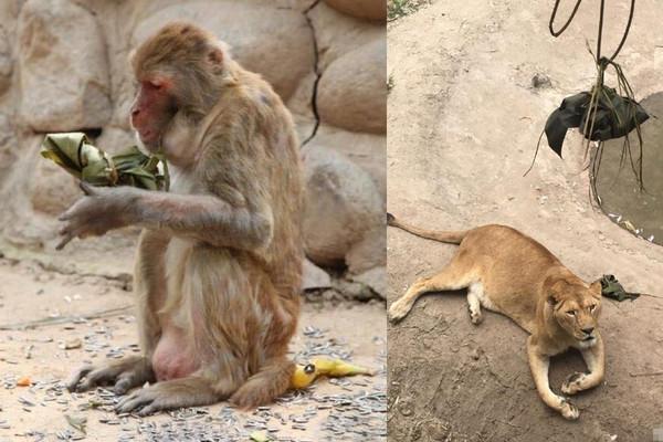 为了给动物园里的动物们过一个特别的端午节,陕西西安秦岭野生动物园