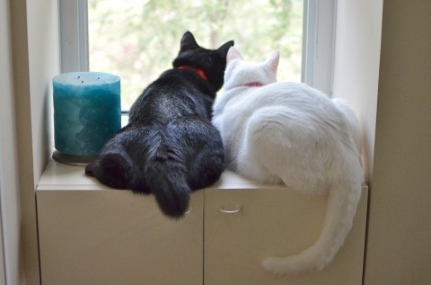 背影会说话 宠物也有「内心戏」   ettoday宠物动物