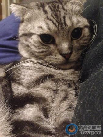 小猫仰头简笔画