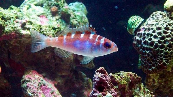壁纸 动物 海底 海底世界 海洋馆 水族馆 鱼 鱼类 600_337