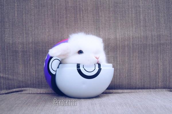 白色迷你兔在宝贝球内歪著头的模样,萌度破表.