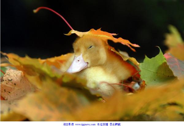 秋天落叶飘地 成小动物玩乐天堂
