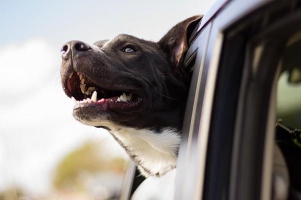 狗,汪星人,寵物(圖/取自LibreStock網路)
