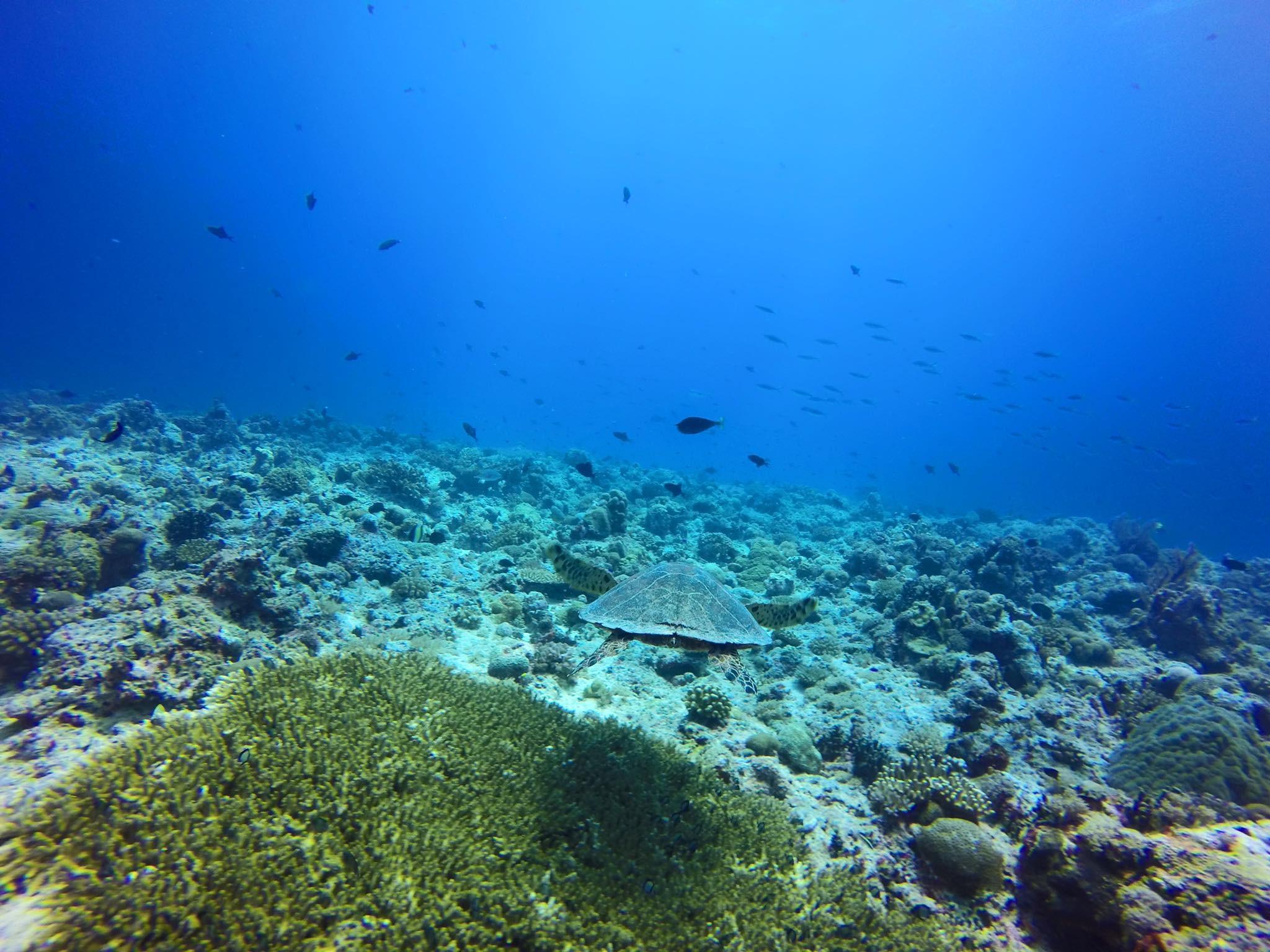 帛琉拥有丰富的海底世界.
