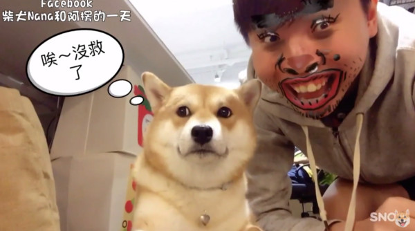 柴犬nana斜眼鄙视:神经病