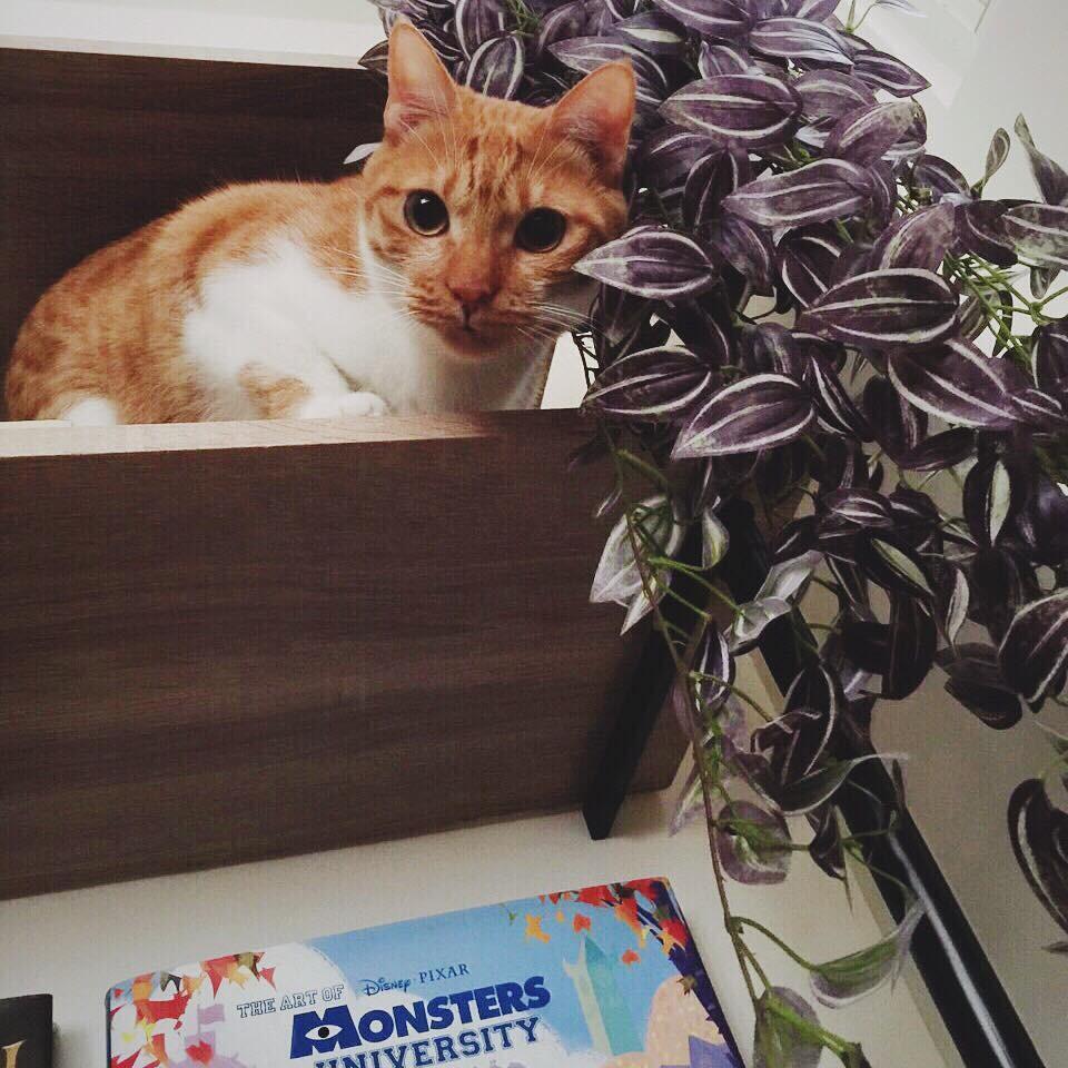 画画时与猫咪的小趣事?