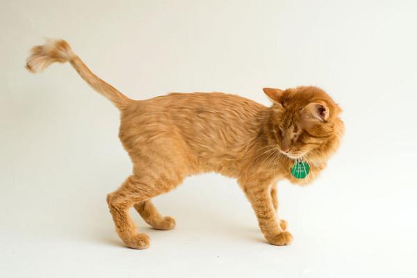 2 |「对盲目的爱」眼盲猫的美照 唤醒大家关注 | 动物