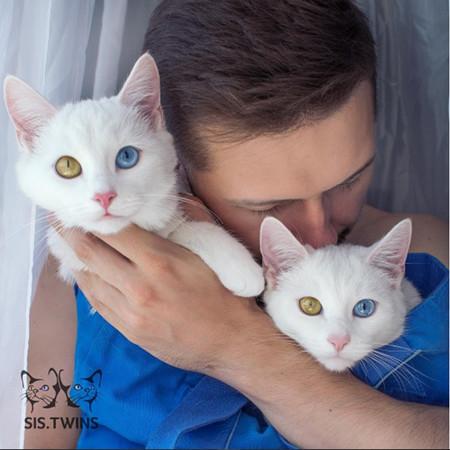 美哭网友!让人难以移开视线的「阴阳眼」双胞胎猫咪