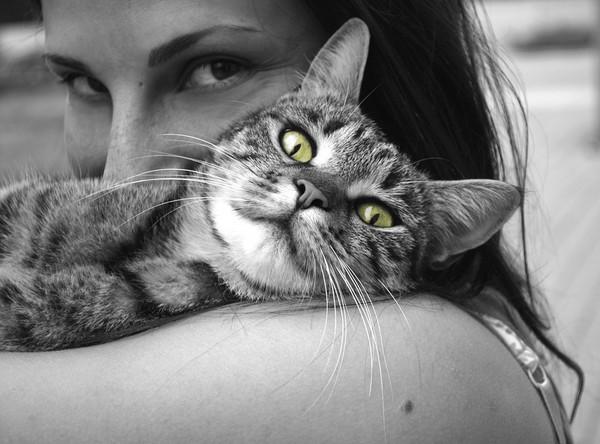跟猫主子「玩亲亲」要看时机! 读懂喵星人「示爱语言」