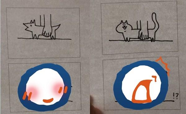 推特帐号@tr059wank贴出一张手绘图,表示「狗狗是固体的,猫咪是
