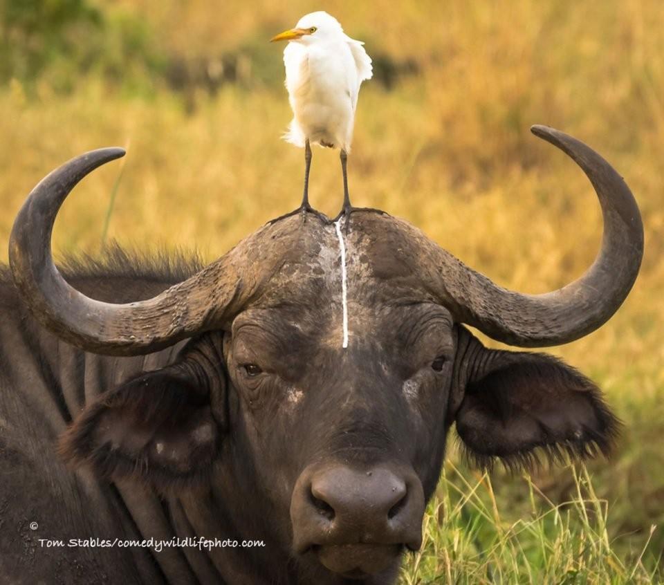 敲可爱的「搞笑野生动物摄影比赛」入围照片