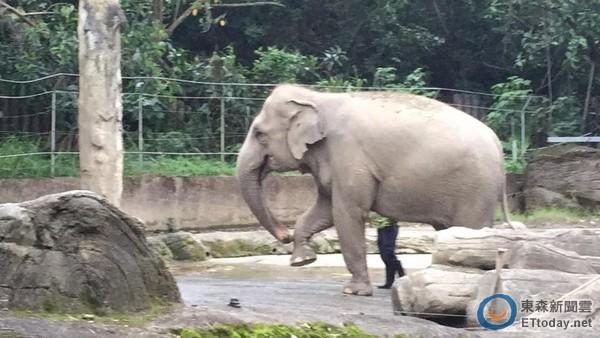 ▼保育员说,动物园所有动物的课程设计动保处都会检视,不能太超过否则