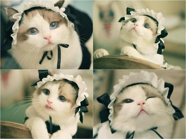 给我一个可爱动物头像