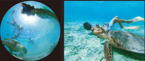 壁纸 海底 海底世界 海洋馆 水族馆 600_253