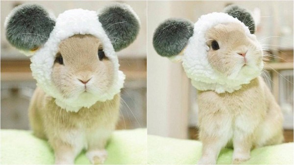 照片中的兔子都戴著各种不同的头套假扮成其他动物,相当可爱.