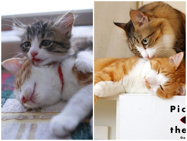 两小猫咪相遇后成为挚友 在同一叠纸上睡觉