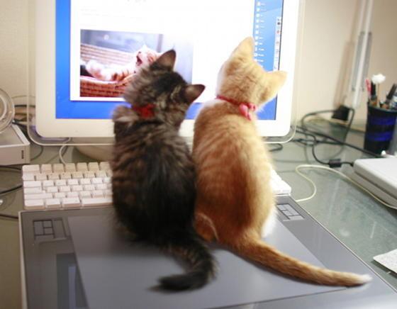 壁纸 动物 狗 狗狗 猫 猫咪 小猫 桌面 560_436