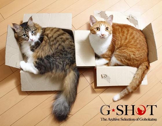 壁纸 动物 猫 猫咪 小猫 桌面 560_438