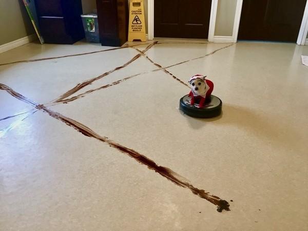 「掃地機器人 大便」的圖片搜尋結果