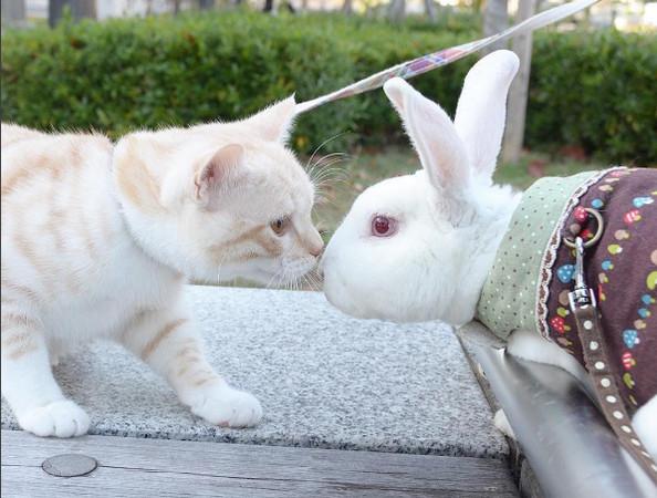 猫咪趴鱼缸喝水遇新朋友 热带鱼亲脸打招呼:嗨~你好