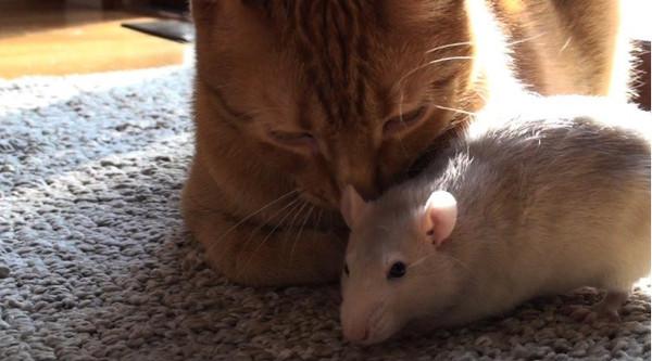超级可爱,暖心的照片让外国网友大赞「太可爱啦,」「好想养一组!