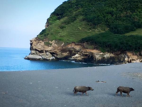 牛山呼庭位在花莲县寿丰乡,坐落於水琏南方海滩的牛山旁;牛山,顾名思