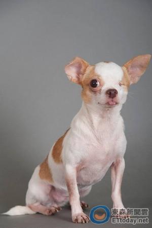 我的老师是条狗! 学生:原来小动物跟我们一样需要爱