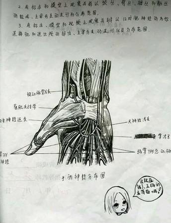 就是让学生手绘人体解剖图,可以帮助学生加深人体结构的认识.