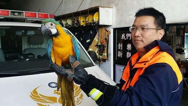 天外嬌客!輔仁中學期末考 飛來「藍黃金剛鸚鵡」吸目光