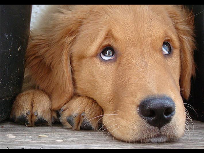 为啥狗狗爱歪头乱咬东西?原来这7种「诡异行为」是这个意思