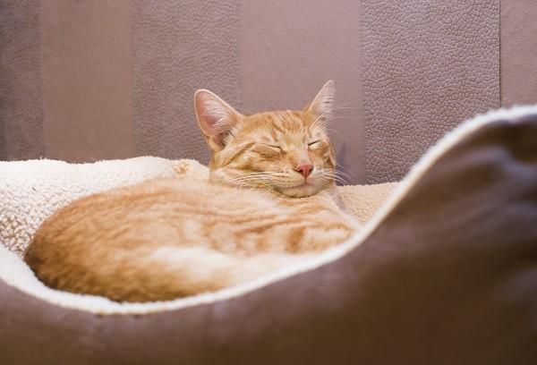 貓,喵星人,寵物,睡覺(圖/達志/示意圖)