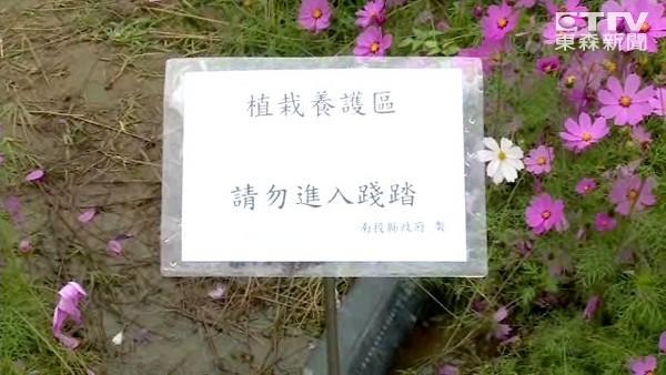 猫罗溪沙洲花海缤纷美丽,搭配蝴蝶及心型相框等艺术造景,游客造访频