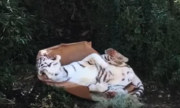 纸箱子动物贴画