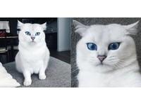 漫畫走出來!藍眼珠+灰眼線 空靈白貓根本美男子(圖/翻攝自Instagram:cobythecat)