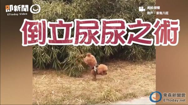 倒立的动物视频及图片