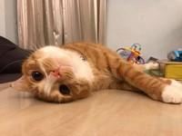 ▲超萌的貓咪「啾咪」坐在安全座椅上,一臉無奈。(圖/飼主Vicky Huang提供,請勿隨意翻拍,以免侵權。)